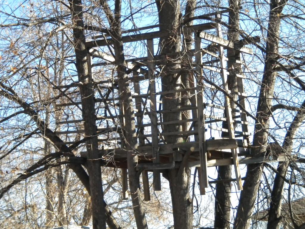 Tree House # 1