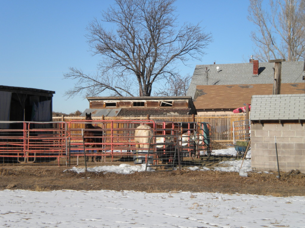 Bucolic scene # 3 -- a few horses enjoying the day