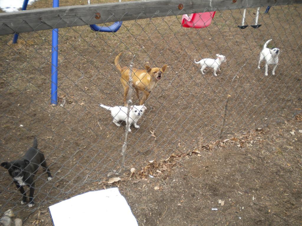 Protecting their yard