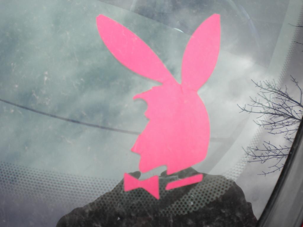 Longmont Streetwalker Bunny