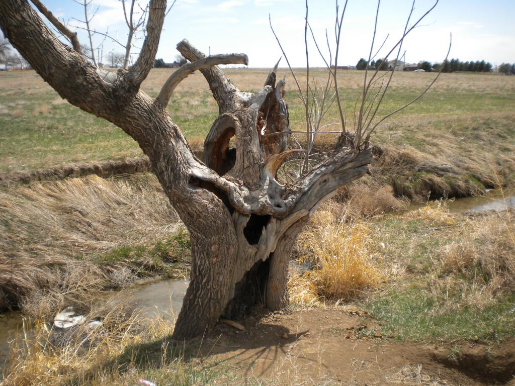 Cool tree stump