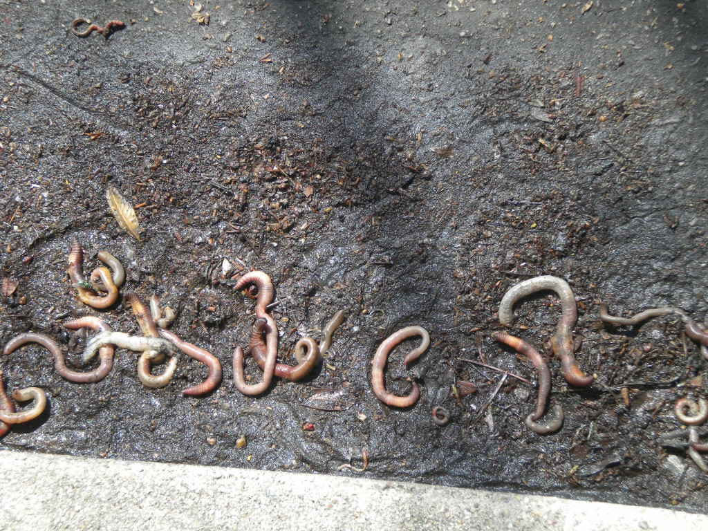 it almost seems like these gutter earthworms are spelling something