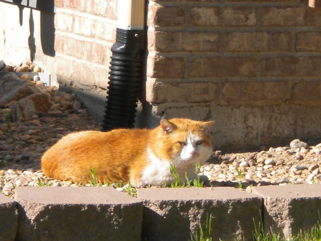 neighborhood watch-cat