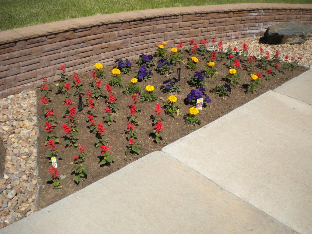 orderly flowers