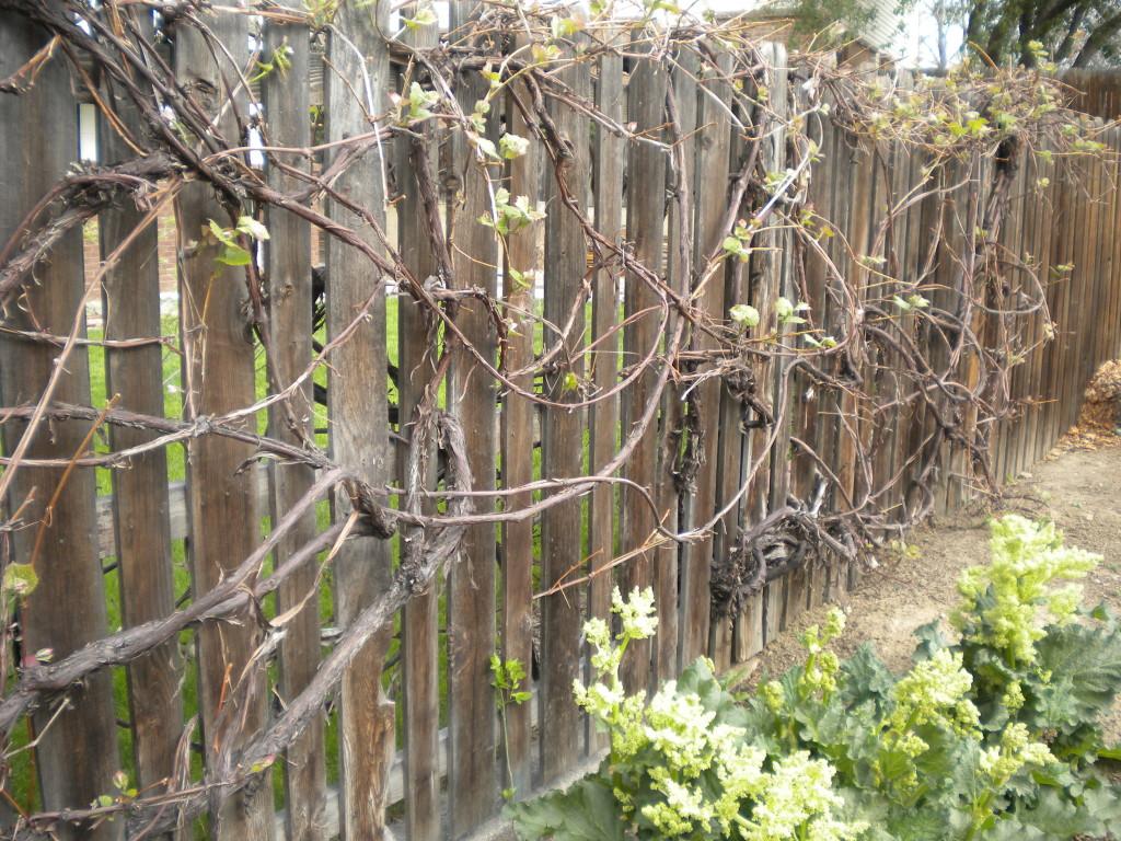 Braided vine fence