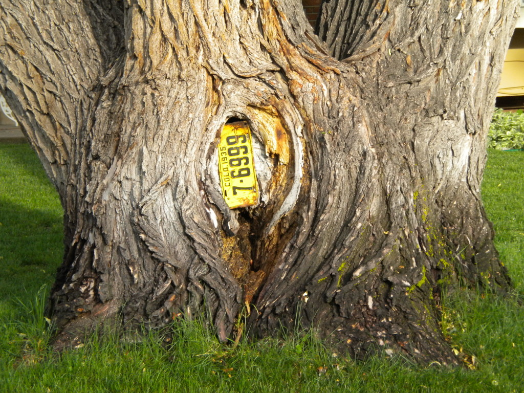1935 license plate embedded in tree