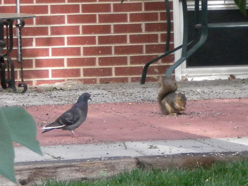 The Peaceable Kingdom  --- proof the pigeon and squirrel can live as friends