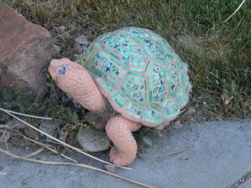 My little turtle buddy