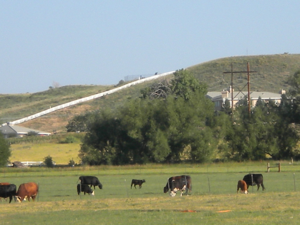 north of town--- cows,  plus mansion on the hill