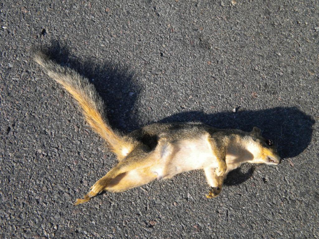 north of town... sad squirrel