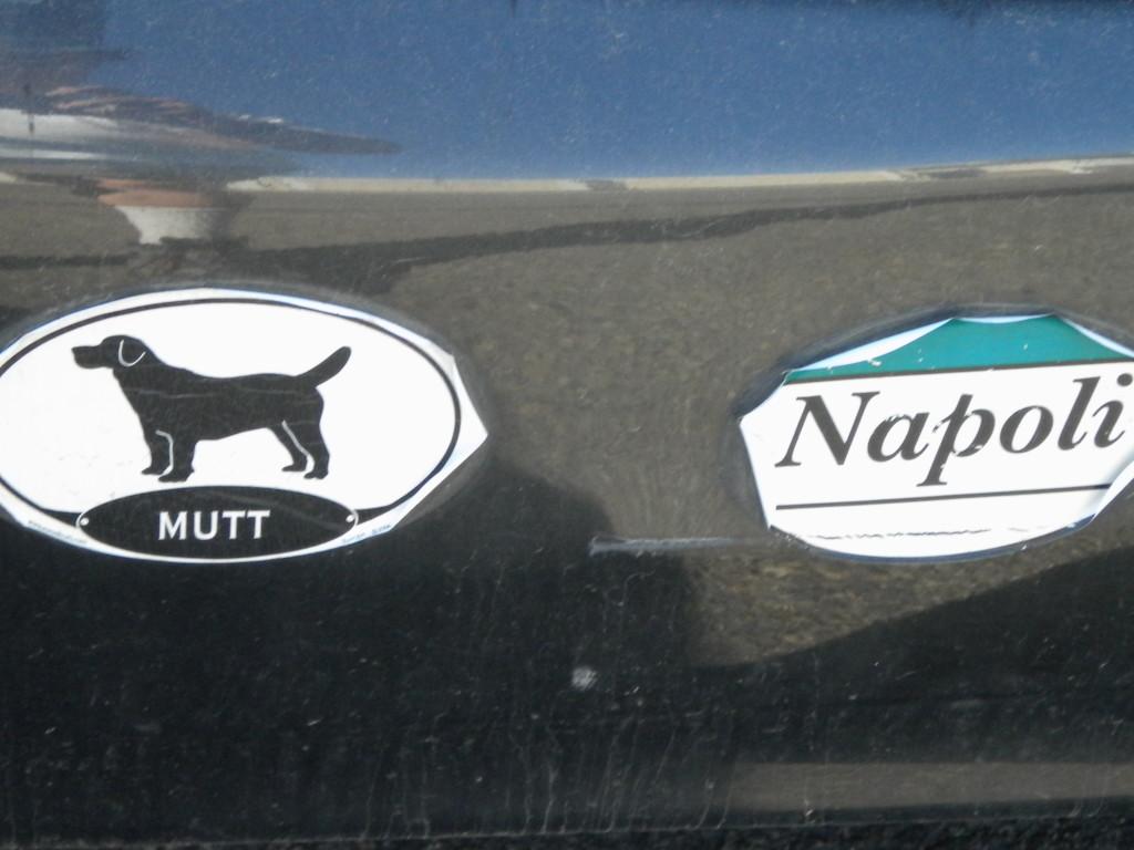 I love this dog sticker