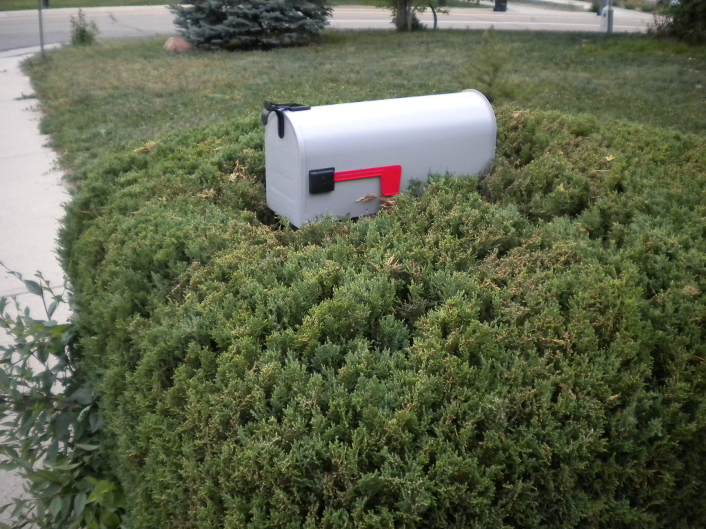 mailbox being swallowed up by bush