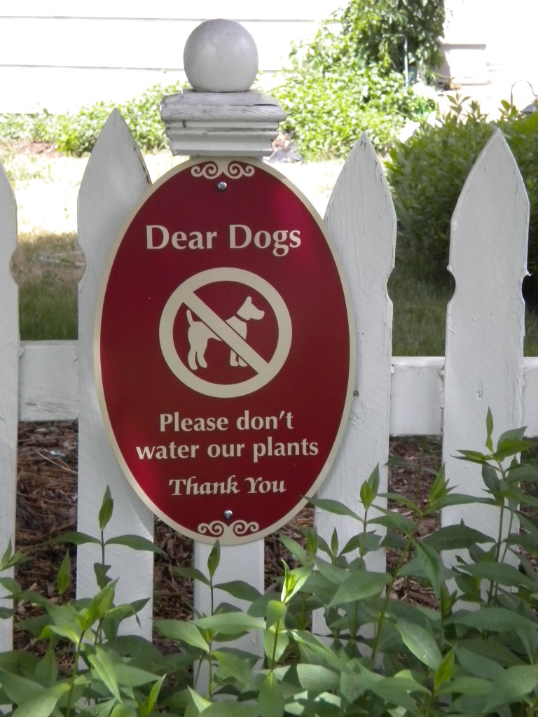a polite request to dogs