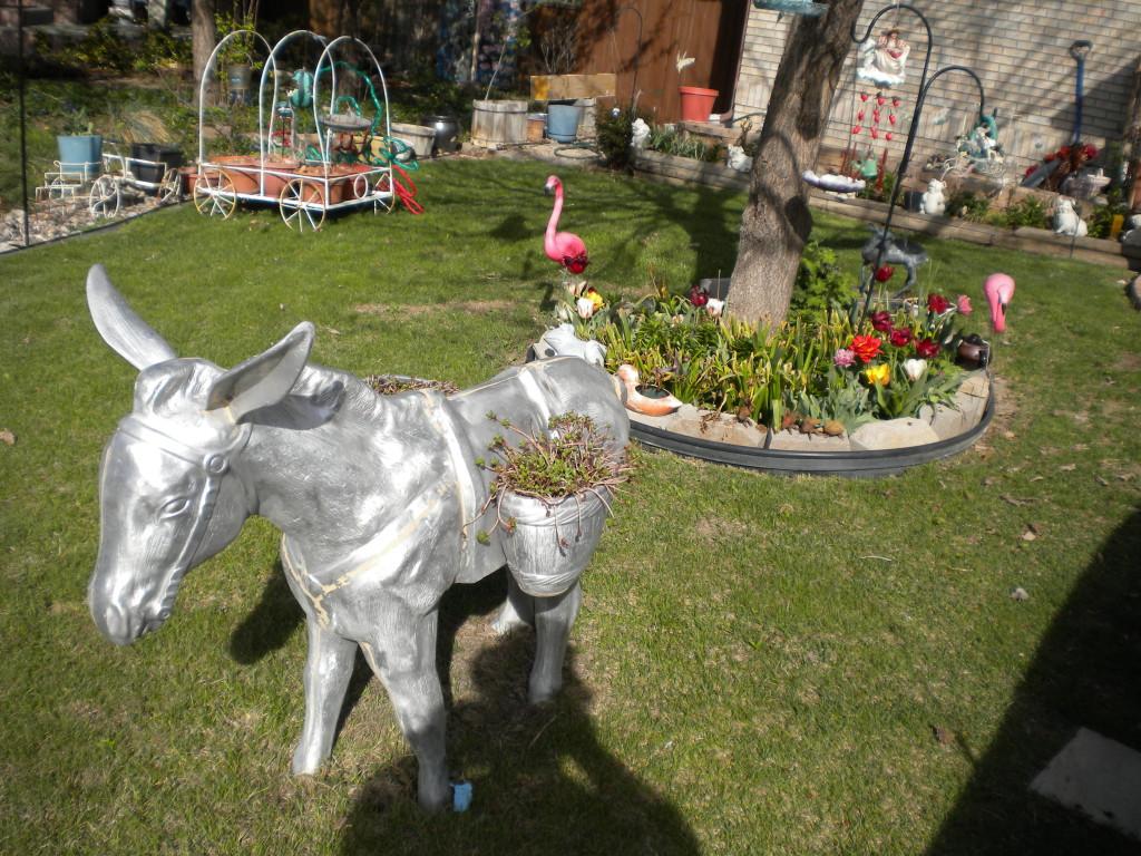 Silver Burro