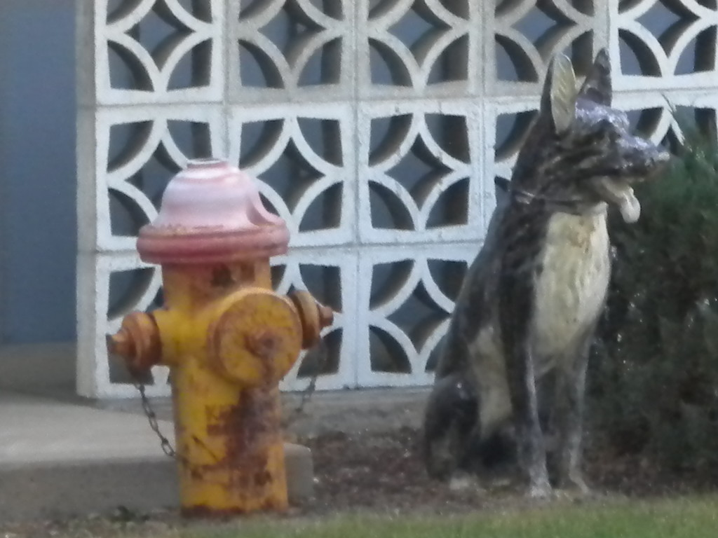 Dog with fire hydrant (convenient!)