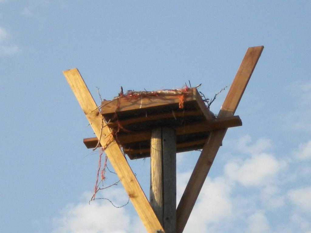 Osprey nest on 75th?