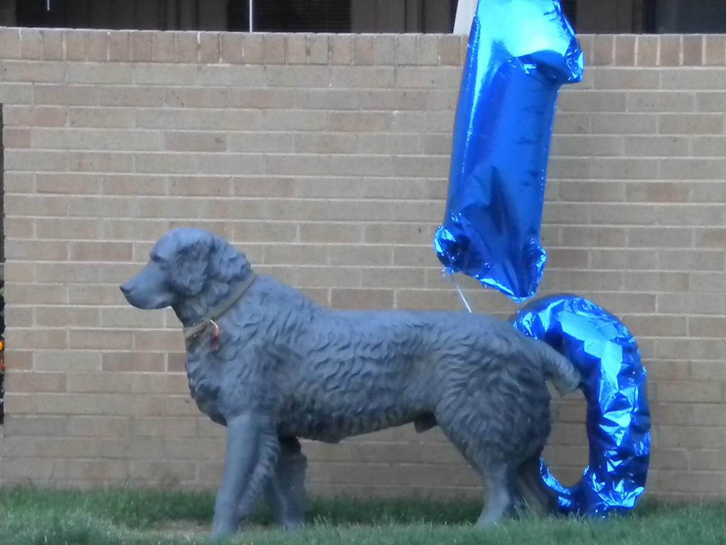 Dog and deflated ballons