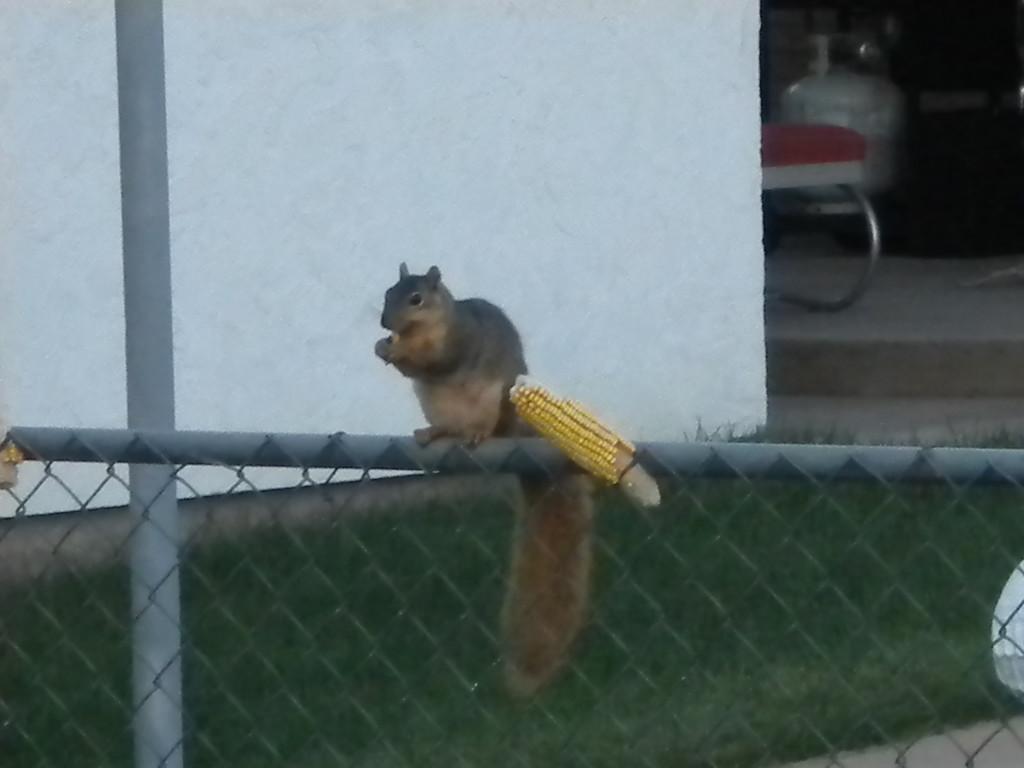 squirrel having a leisurely breakfast