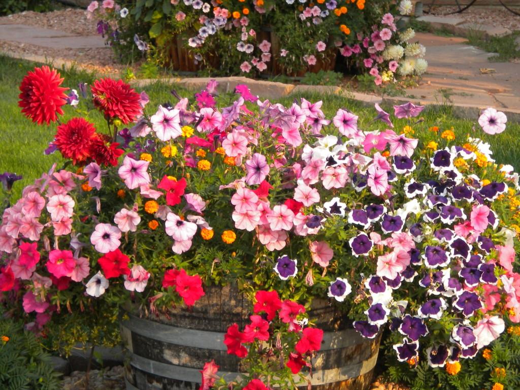 Pretty flowers # 1
