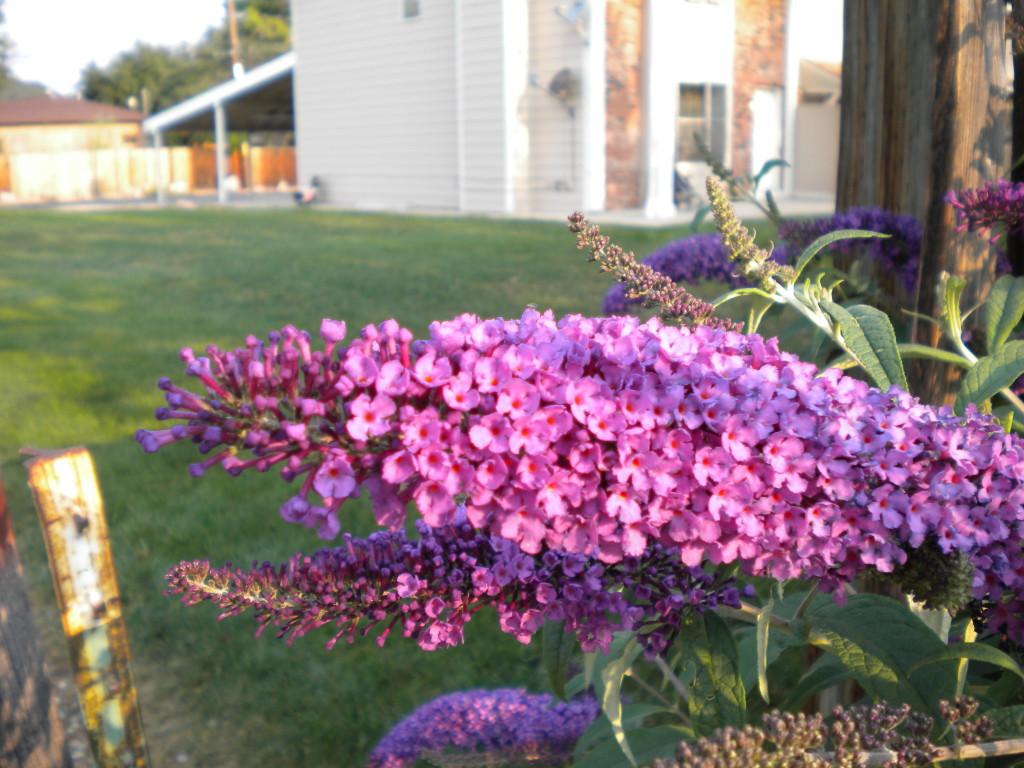 Pretty flowers # 2