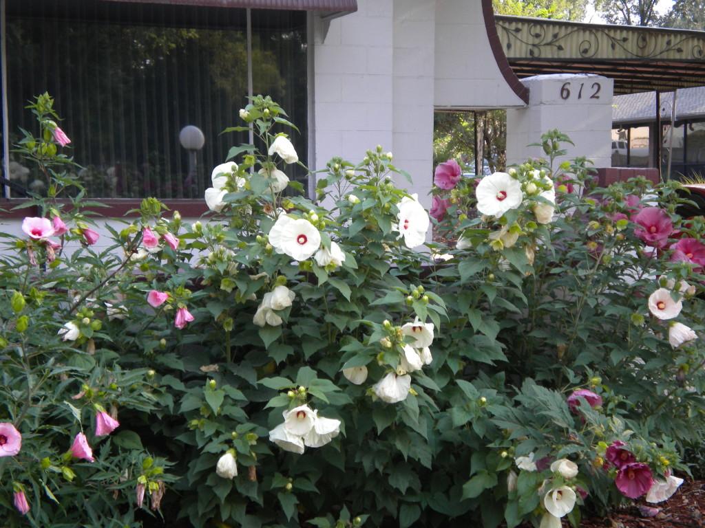 Pretty flowers # 3