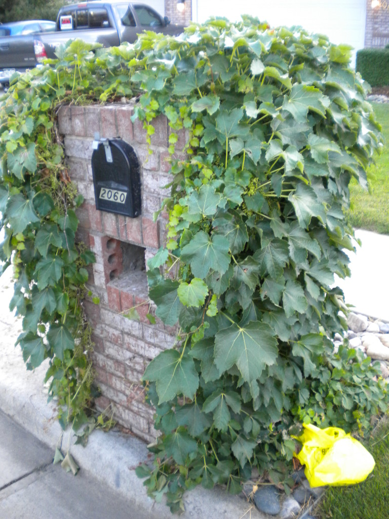 mailbox vines