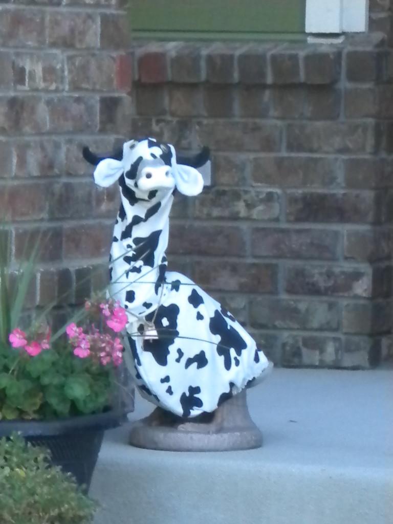Crazy Cow?