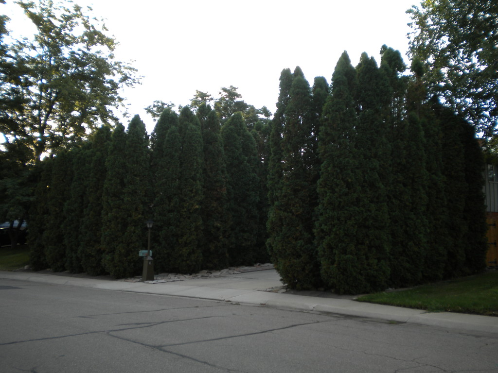 front yard protected by trees