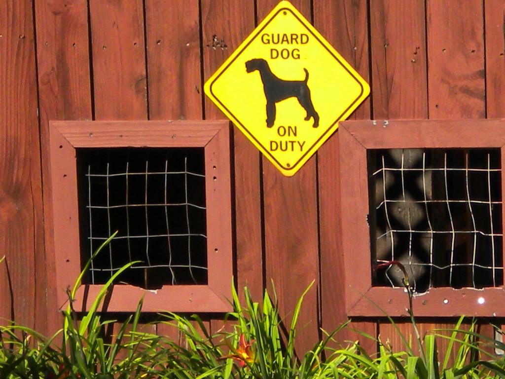 dog viewport 3