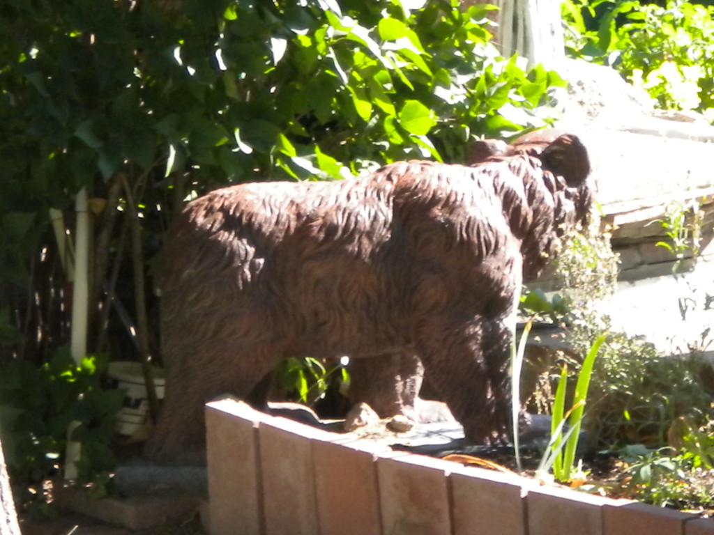 retreating bear