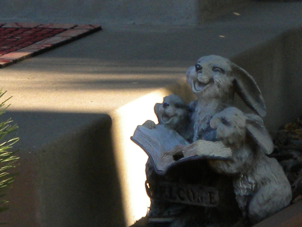 Laughing lagomorphs enjoying a good read...