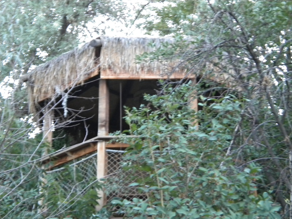 Polynesian hut
