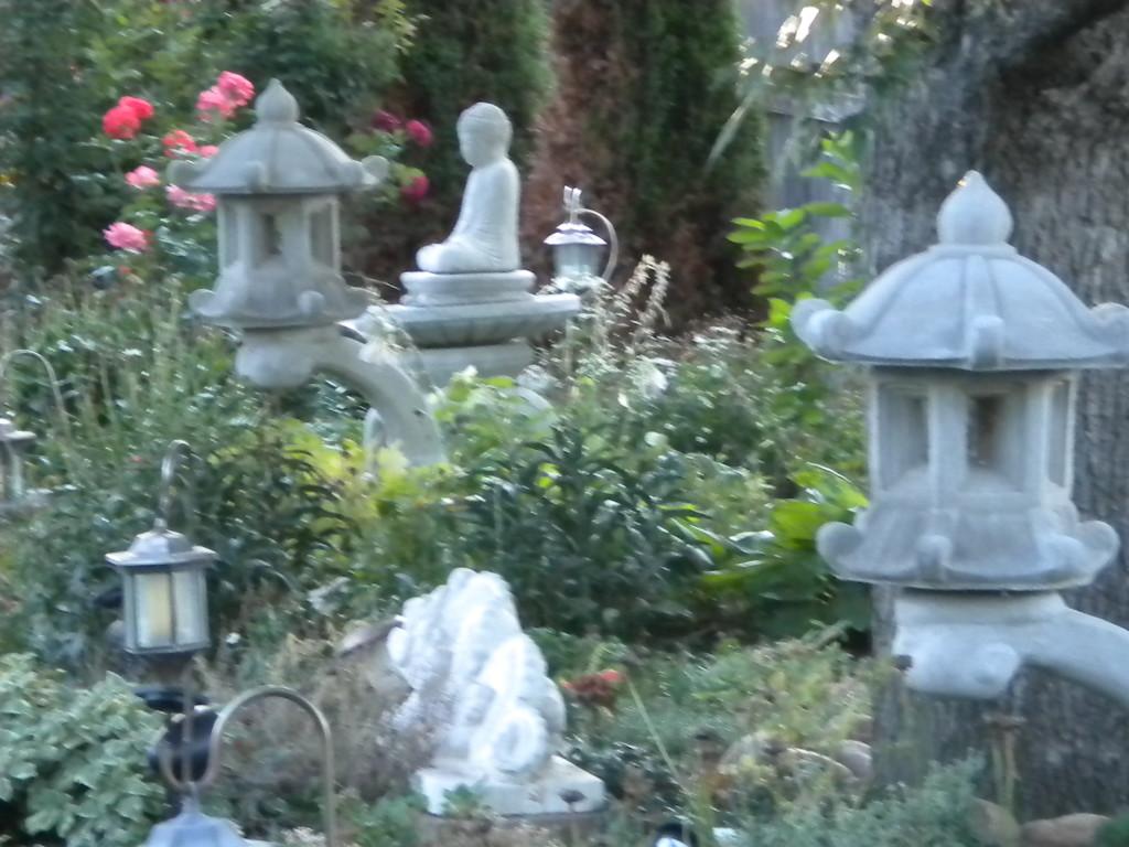 serene back yard