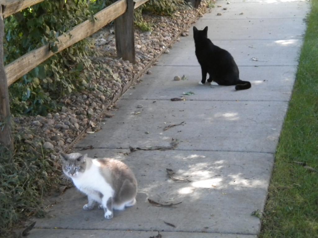 black and non-black cat