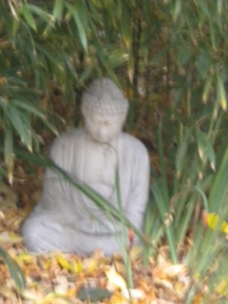 secluded Buddha