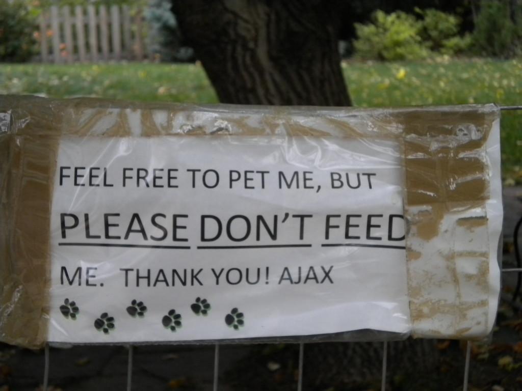 no sign of Ajax today (a dog, I presume?)
