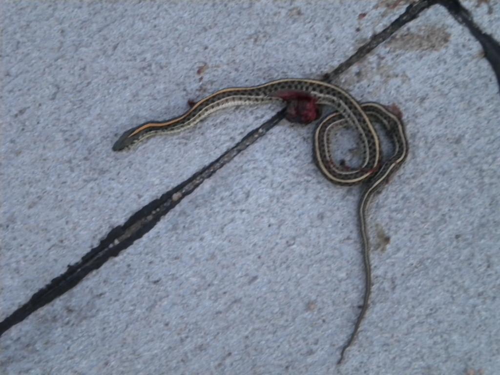 passed snake
