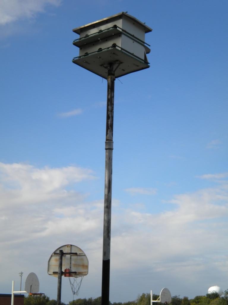 birdhouse towering over 3 basketball hoops