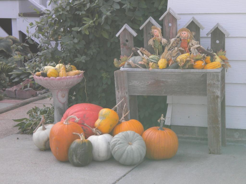 multi-colored pumpkins