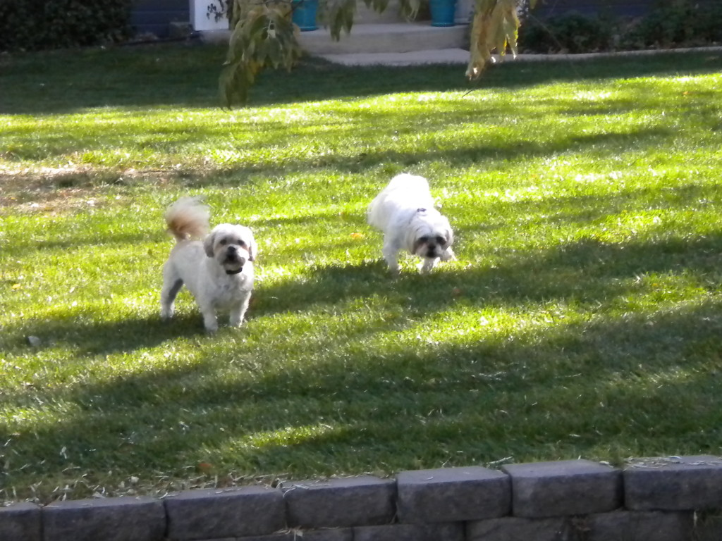 two cute dogs protecting their property
