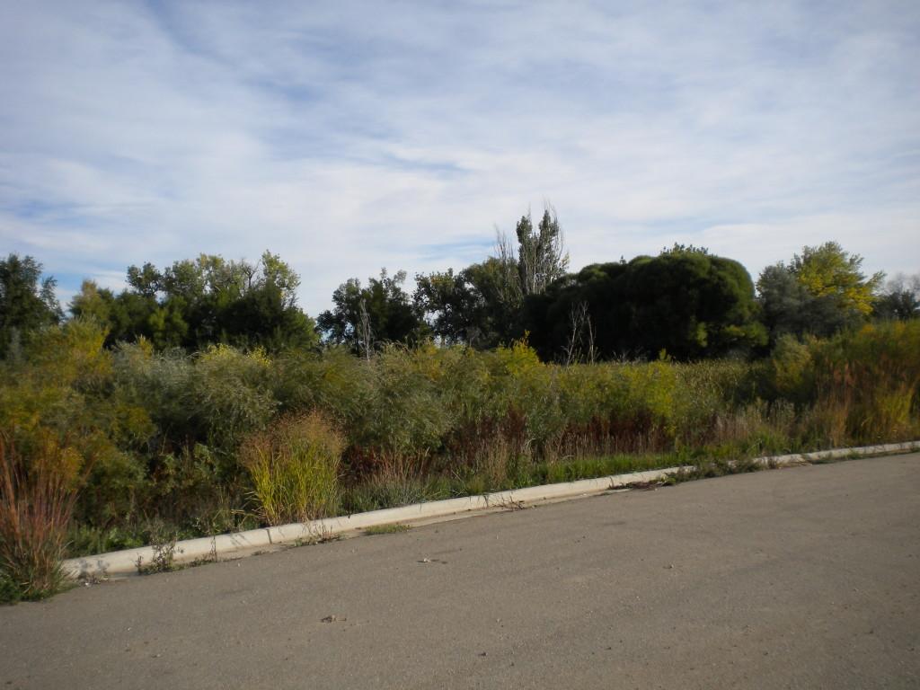 swamp land near hwy 119 & Fordham
