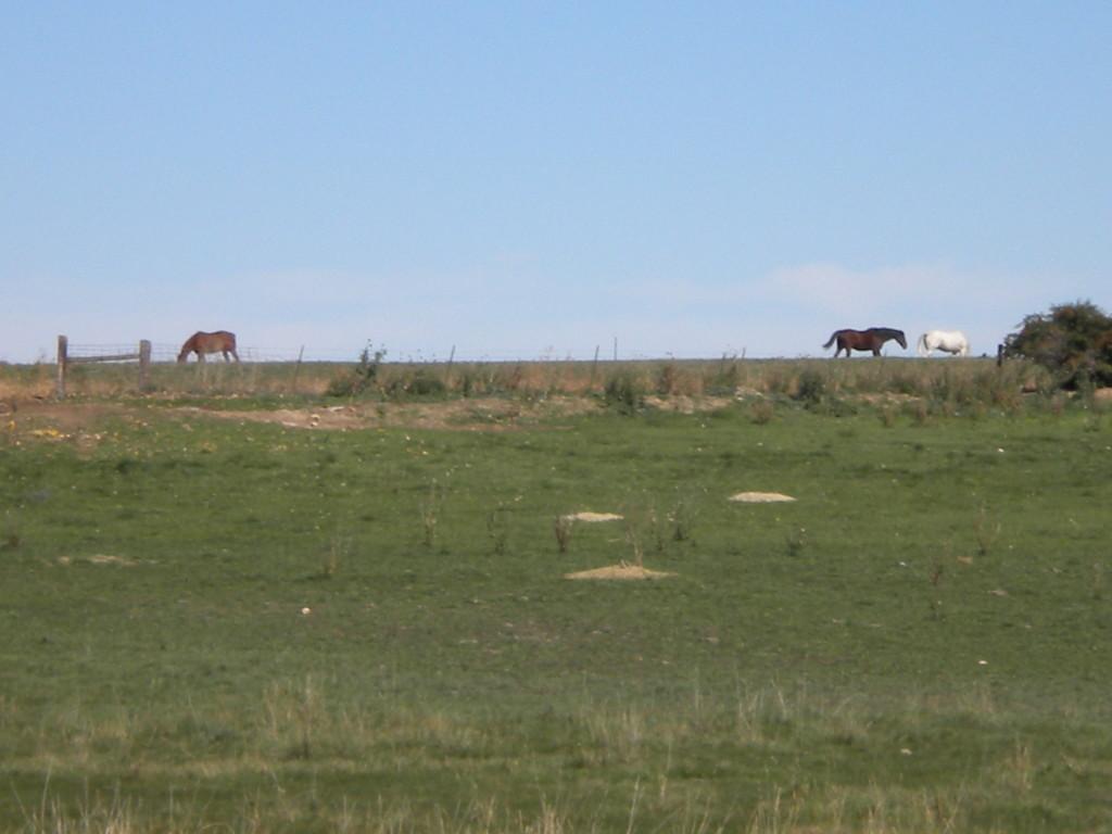 3 horses on the horizon