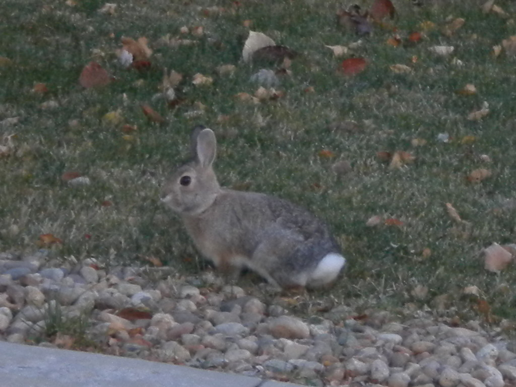 saw TONS of rabbits today