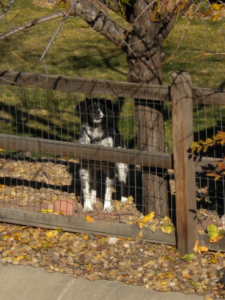 watchful watchdog