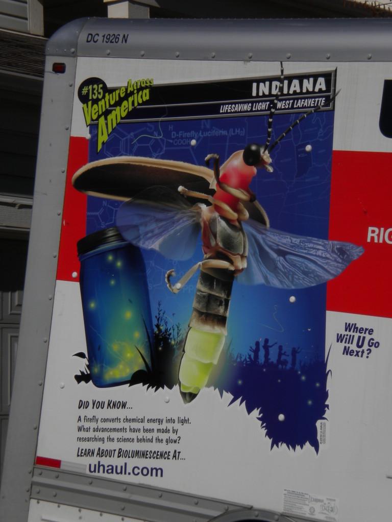 Indiana fireflies