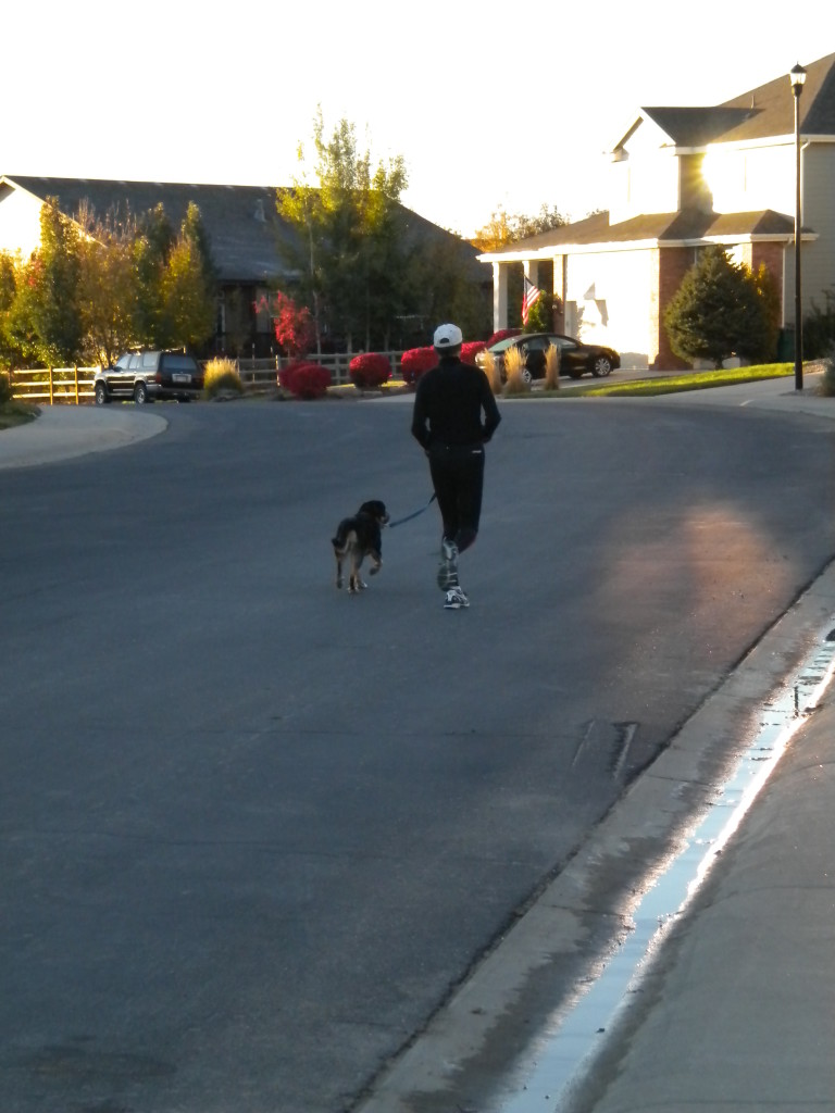 Canine protector # 3 --- out for early morning jog