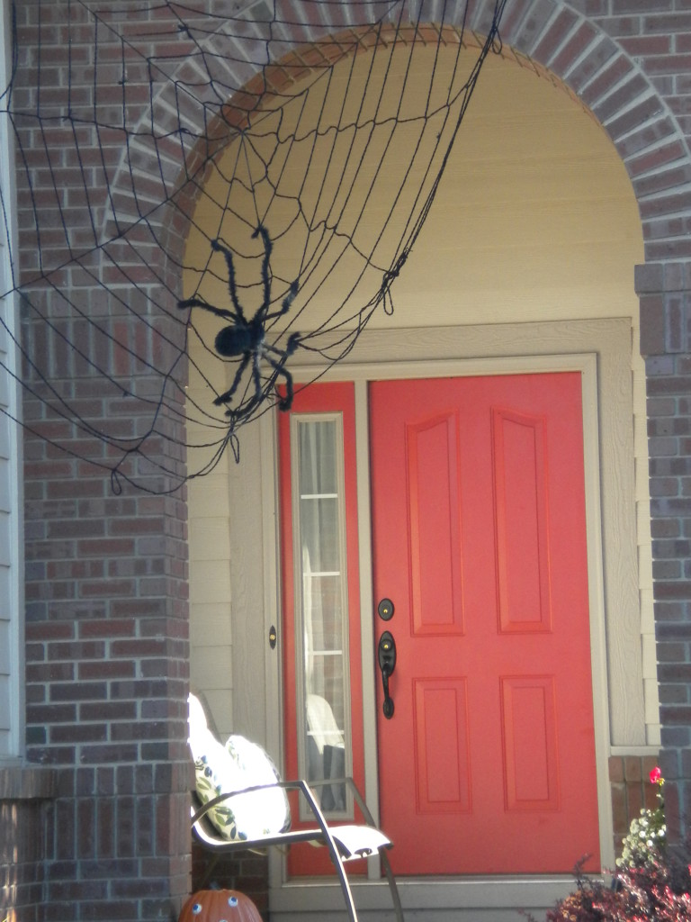 spider web entry