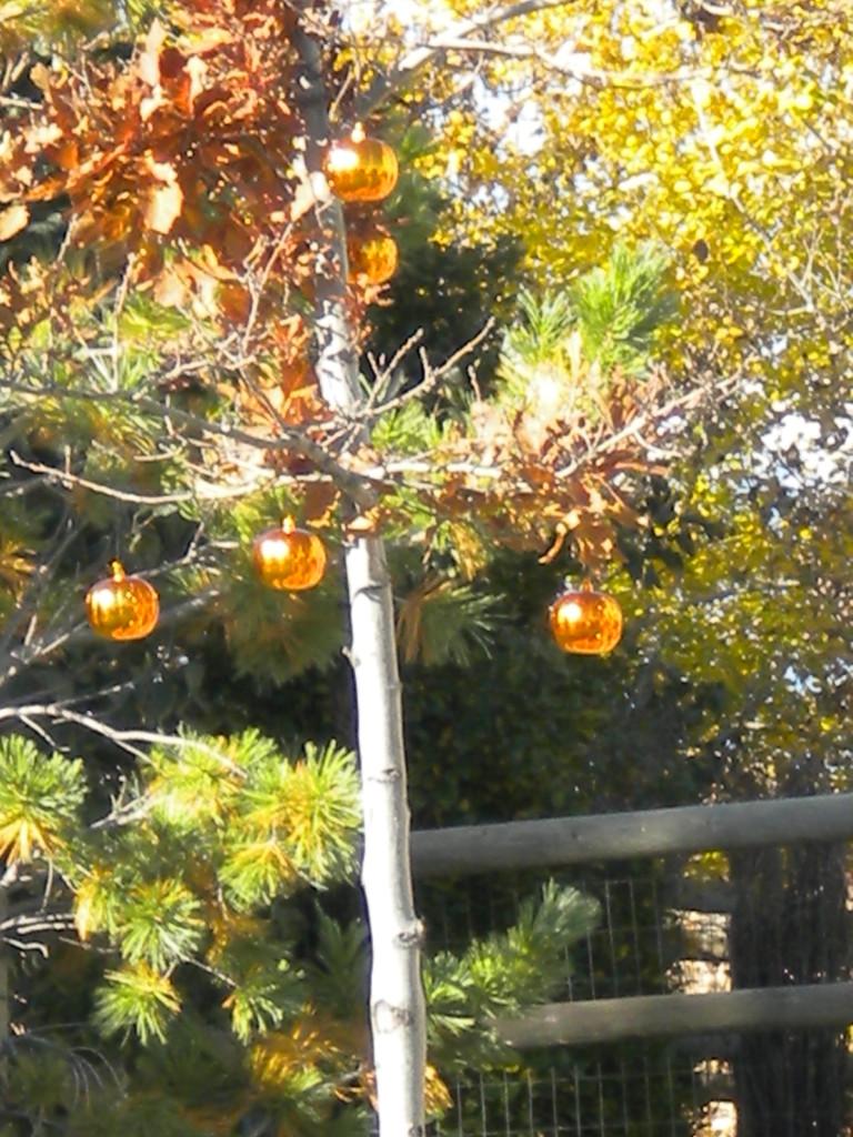 shiny orange orbs