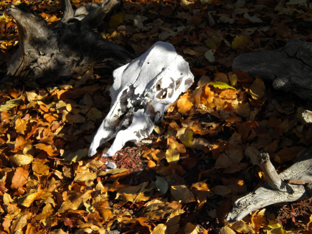skull in the leaves