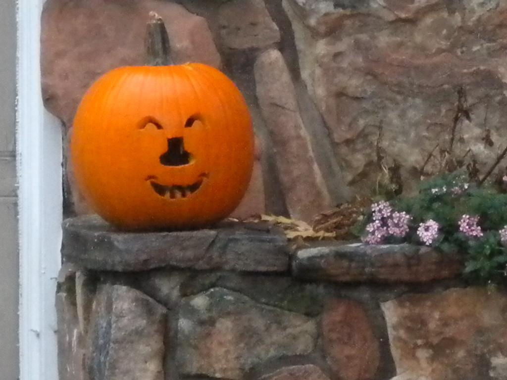 unusual pumpkin nose